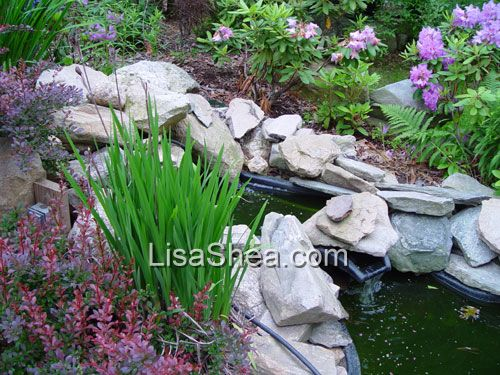 Form shaped water garden