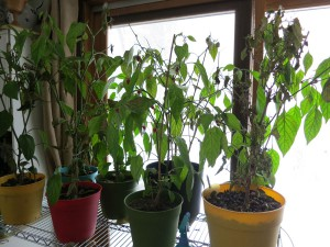 peppers-02182014