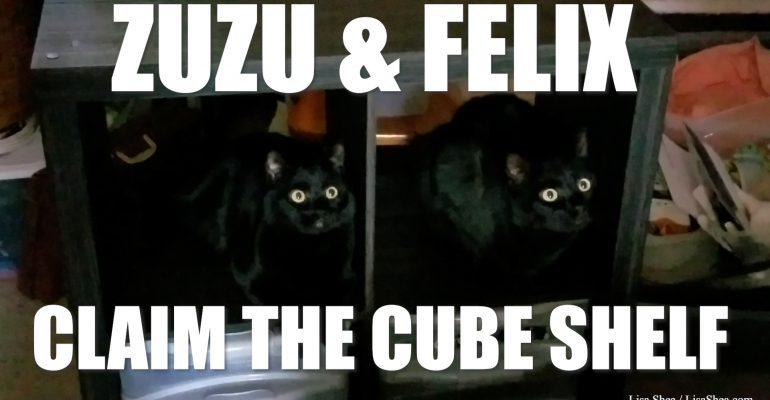 Zuzu and Felix Black Cats