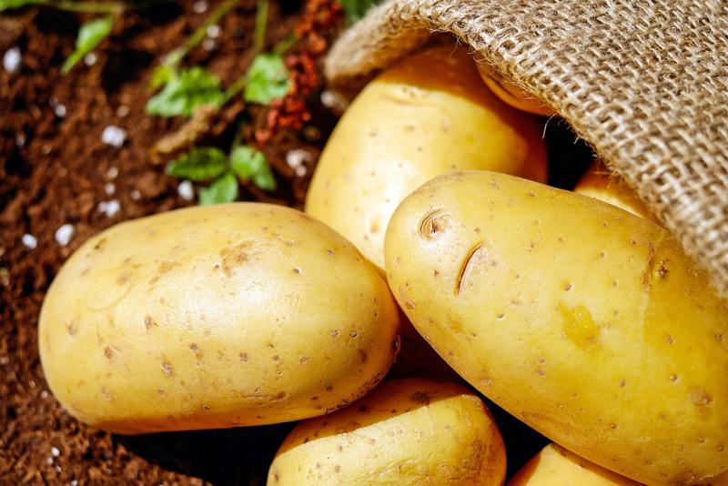 Lotato - the Low Carb Potato