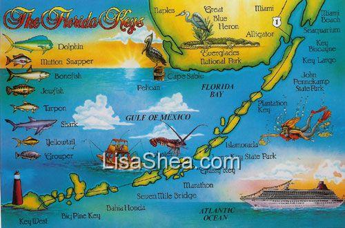 Driving Key Largo to Pine Key Deer  Key Largo Key West