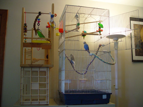 Building A Bird Play Gym Parakeet And Budgie Play Areas