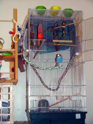 Cage Liner / Cage Bottom for a Parakeet or Budgie
